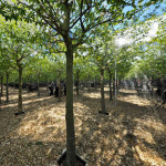 """""""Endless Forest"""" Art Installation Highlights Need for Trees in Cities"""