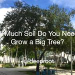 How Much Soil Do You Need to Grow a Big Tree?