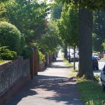 San Francisco's Better Streets Plan Misses the Point on Trees