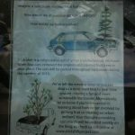 Trees Grow in Vanouver (Cars)