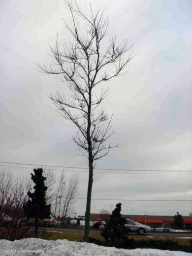 tree salting 1