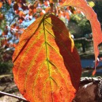 Friday Follies: An App to Identify Trees From Photos?
