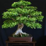 How To Grow Small Trees