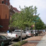 The Best Street Trees: Reader Edition