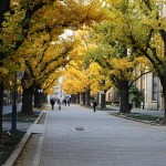 The Best Street Trees: Reader Edition Results!