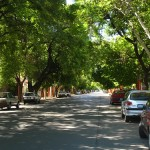 How Climate Change Will Affect Street Tree Selection