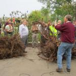 Hands-On Tree Roots: Rochester Arborist Workshop