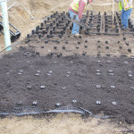 """How Long Can Soils """"Live"""" Under Paving Without Trees?"""