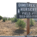 Nursery Trees Are Not All Created Equal