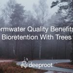 Stormwater Quality Benefits of Bioretention With Trees