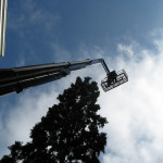 The Future of Urban Forestry