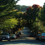 SF Friends of the Urban Forest's 30 Year Old Trees