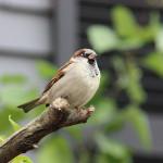 Street Trees That Attract Birds