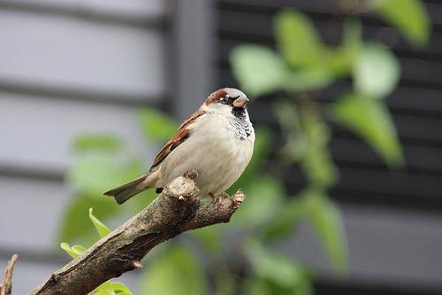 Atraer Aves - Federación Nacional de Vida Silvestre