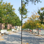 Sites Where Ordinary Street Trees Fare Best