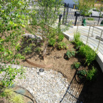 Non-Profit Sets Their SITES on Trees Silva Cell Case Study: Meeting On-Site Stormwater Management Goals