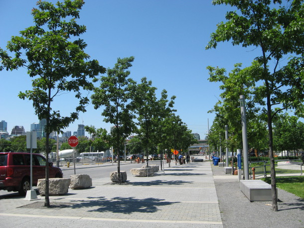 The trees at Sherbourne Common. Much improved, but not out of the woods.