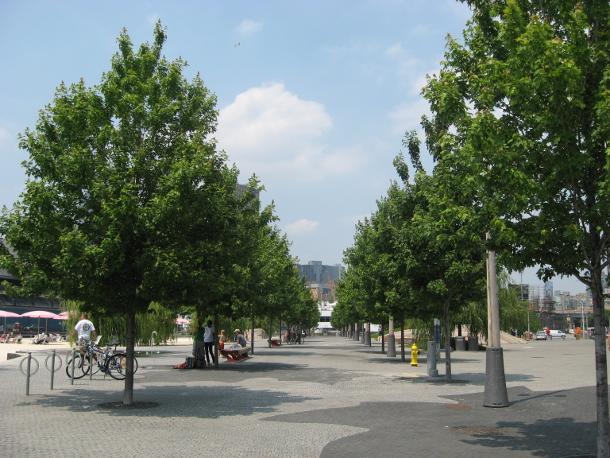 Sugar Beach trees in summer 2012.