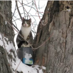 A Cat's Literal Treehouse