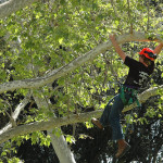 What Arborists Need to Know About Working With Wildlife