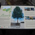 Casey Tree's Silva Cell Bioretention Garden Panel