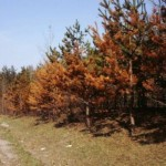 How to Avoid Salt Damage to Trees