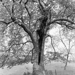 How to See a Tree in Photos