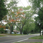 Soil Volume Minimum for Street Trees Established in Oakville, ON