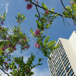 The Best News in Trees and Green Infrastructure