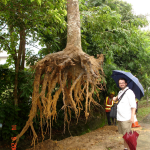 How Deep Do Tree Roots Really Grow?