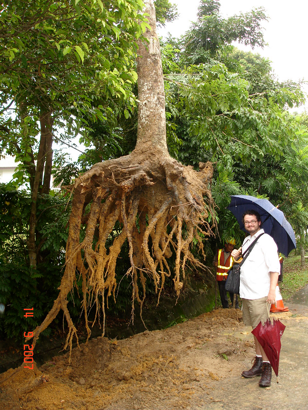 Vertical roots in well-drained soil. Photo courtesy of Craig Hallam.