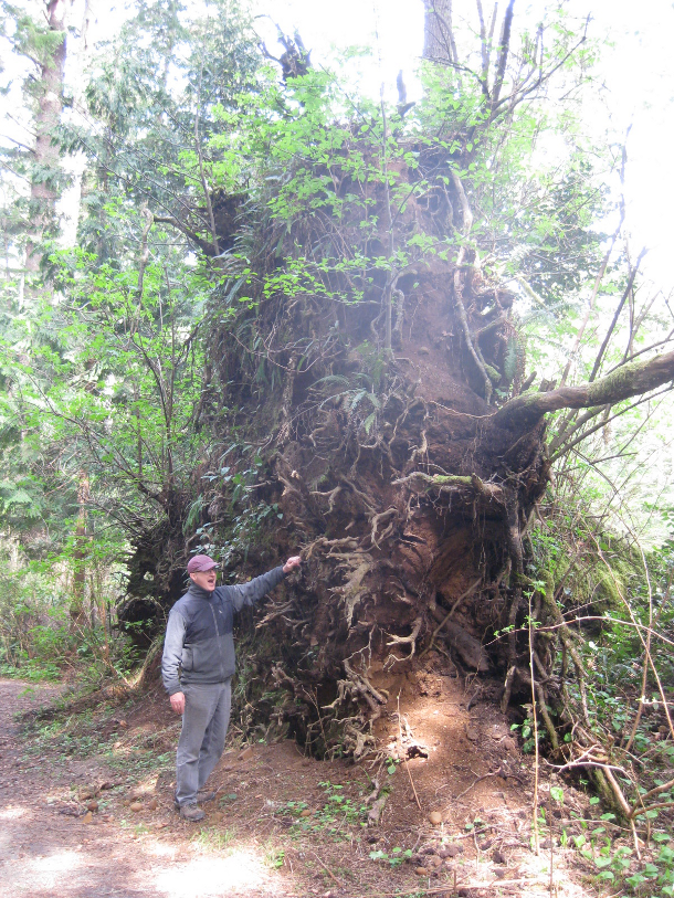 How Deep Do Tree Roots Really Grow Deeproot Blog