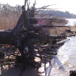 How Deep Do Tree Roots Grow?