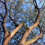 Bioretention and Nutrient Removal Part 3: What factors affect vegetation performance?