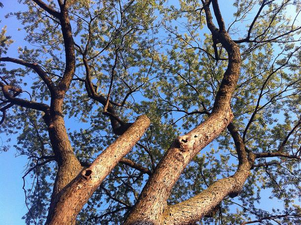 Dissolved Nutients - Which Vegetation is Best?