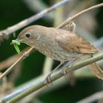 How Urban Trees Help Migrating Birds