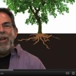 "Kinda Like ""The Story of Stuff"" – For Trees"