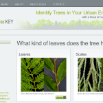 History of the Urban Tree Key