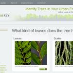 History of the Urban Tree Key