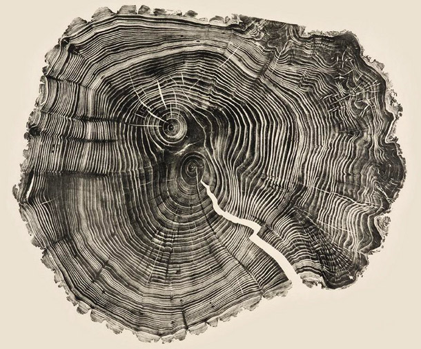 Woodcut Prints Showcase The Beauty Of Tree Rings Deeproot Blog