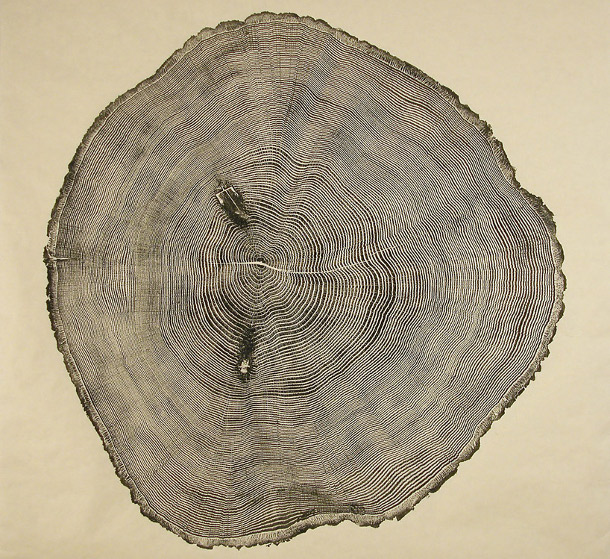Woodcut Prints Showcase The Beauty Of Tree Rings