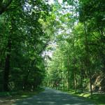 Proper Tree Installation & Maintenance <br><em><i>Making Your Hard Work Count</em></br></i>