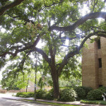 Minimum Soil Volumes for Trees Part 1: Lessons Learned from Municipalities