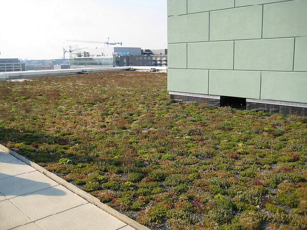 Green roof - Washington DC