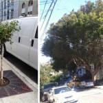 Little Tree, Big Tree