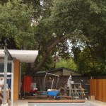 Green Building from the Outside In<em><br><i>Preserving Trees During Construction</em></br></i>