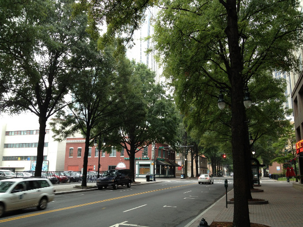 28 year old trees in suspended pavement in Charlotte, NC