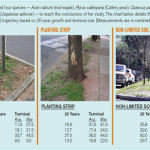 """""""Apparent Available Soil"""" A Good Predictor of Tree Size"""