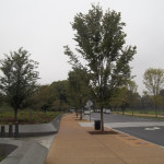 Marking the Martin Luther King, Jr. Memorial with Trees