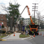 Fighting Over Street Trees in Montgomery County, MD